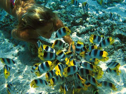 BEST NATIONAL PARKS IN THE WORLD TOP 10Snorkeling at the Pacific Reef.